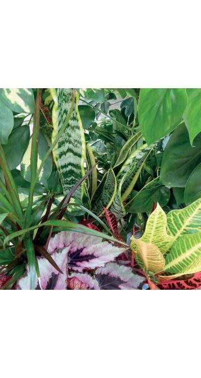 PROFESIONÁLNÍ SUBSTRÁT - pro pokojové rostliny
