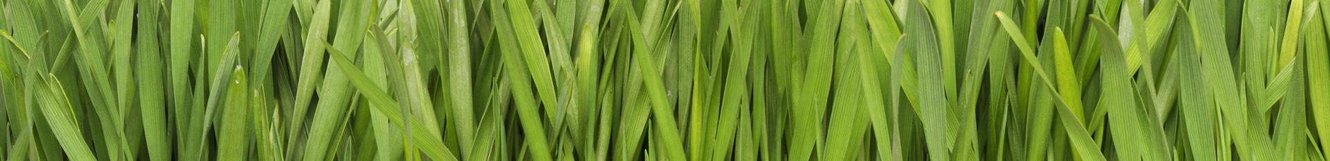 Trávníková hnojiva ICL