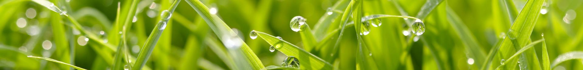 Realizace trávníkové substráty